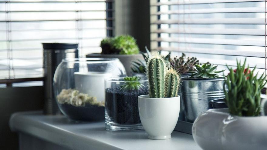 Decora tu casa con cactus, las plantas de moda y que menos cuidados necesitan