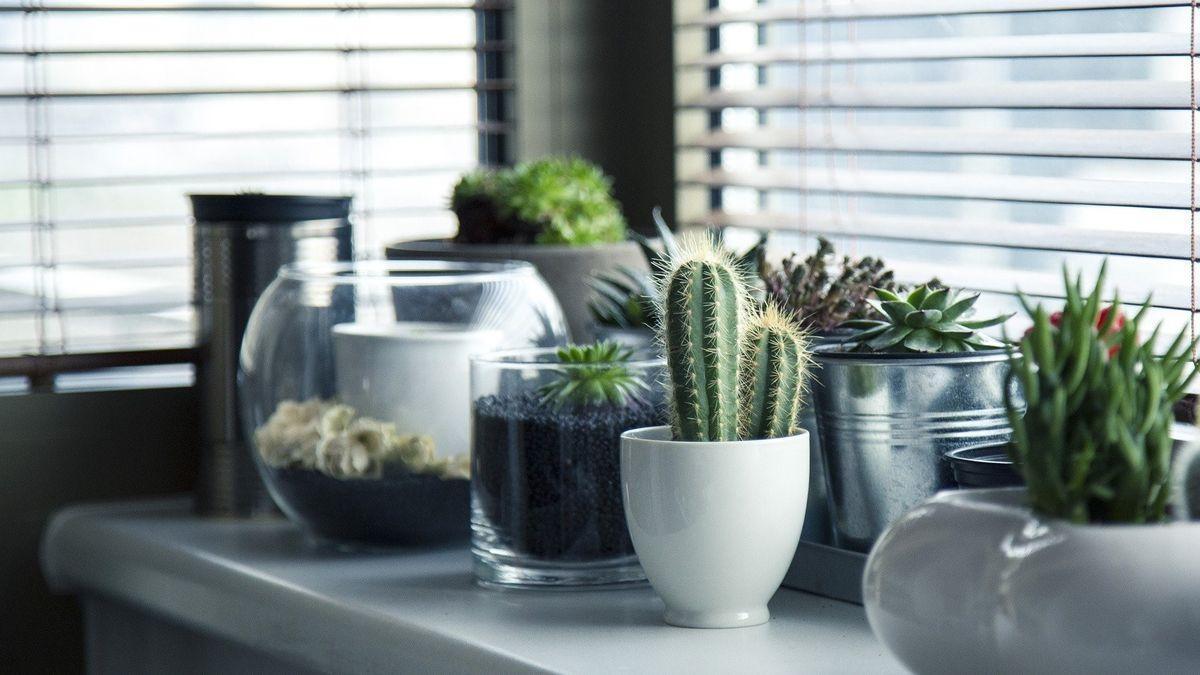 Decorar tu casa con cactus, una tendencia en auge.