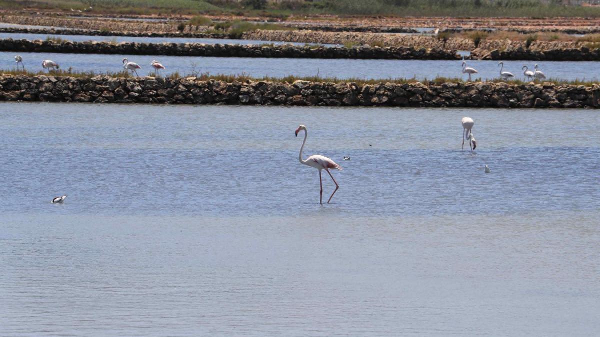 El Plan Territorial del PP definirá la utilización del suelo junto al Mar Menor