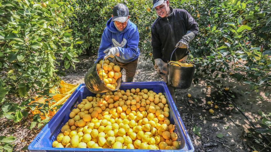 Citri&Co integra al líder del mercado de limón Perales & Ferrer