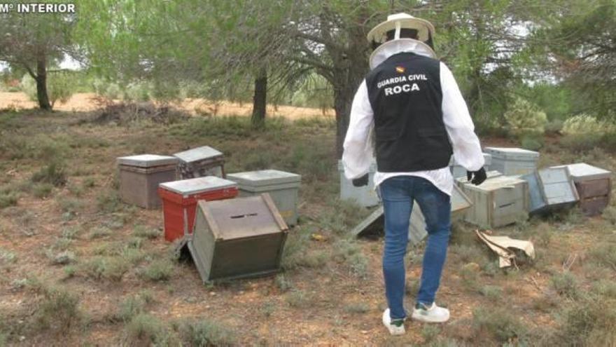 Detienen a tres personas por robar colmenas, panales y enjambres en Chiva
