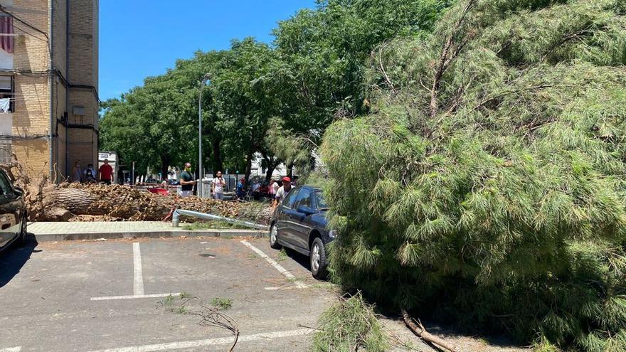 Caos en la calle Algeciras tras la caída de un árbol