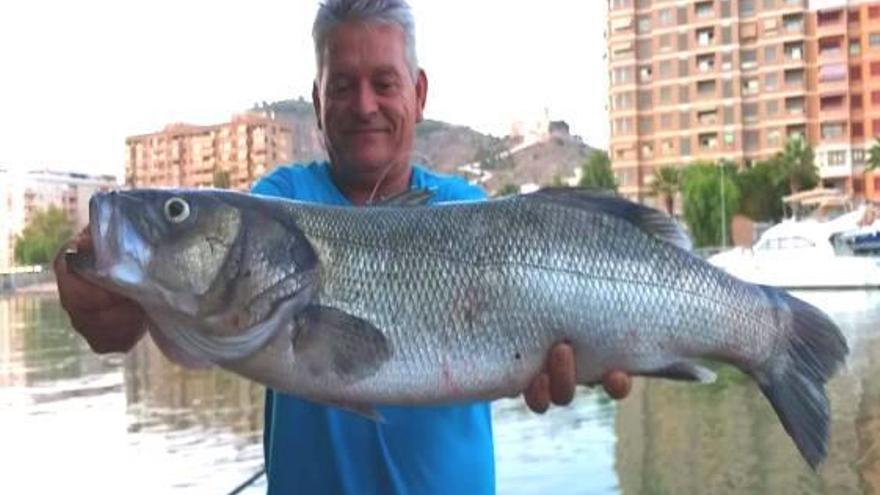 Un pescador captura una lubina de 8 kilos en Cullera