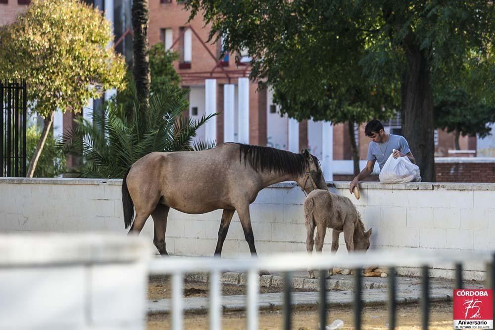 FOTOGALERÍA / La situación actual de las Palmeras