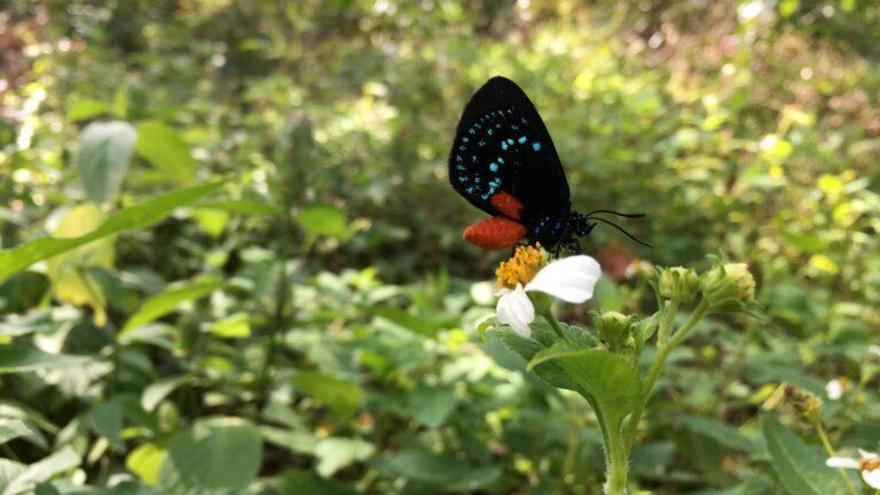 El color está en el ojo de la mariposa, no en la flor