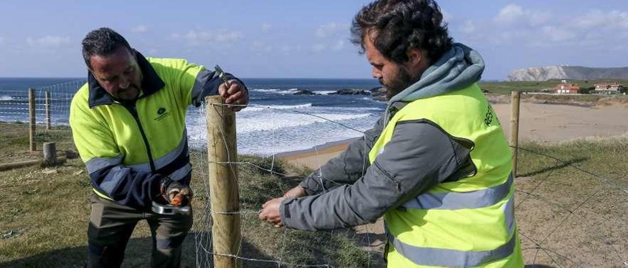 Dos operarios instalan una red para intentar regenerar las dunas de Verdicio.