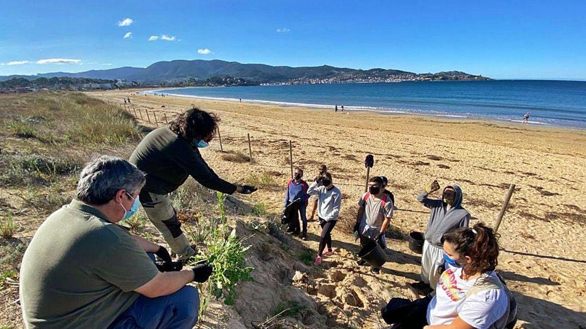 Una veintena de voluntarios luchan contra las invasoras en Praia América