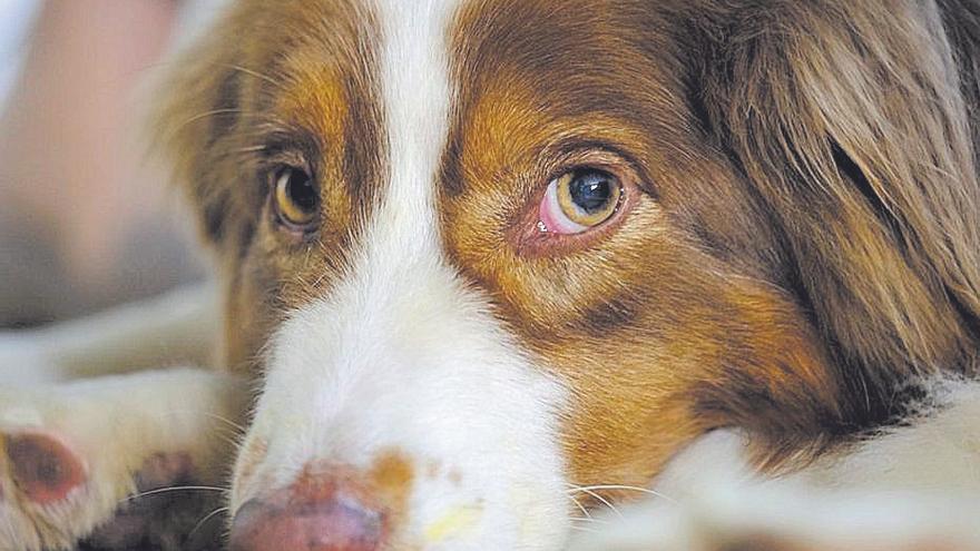 Registro estatal de protección de animales