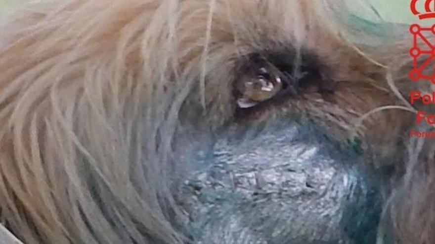 Imputado por disparar al perro de su vecino en Navarra
