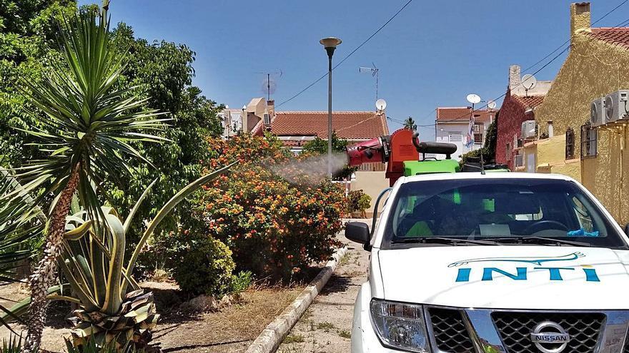 La plaga de mosquitos en Torrevieja crece y obliga a fumigar todos los colegios