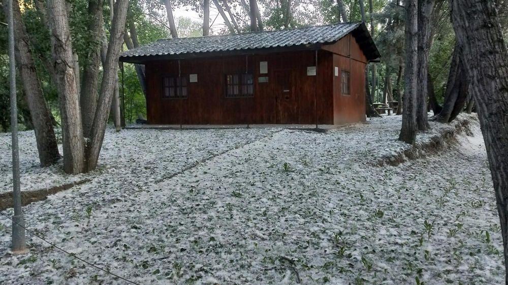 Bages. Imatge de juny, però podria ser tranquil·lament de qualsevol dia d'hivern després d'una petita nevada. Dels pollancres cau el borrissol i deixa una bona catifa a terra.