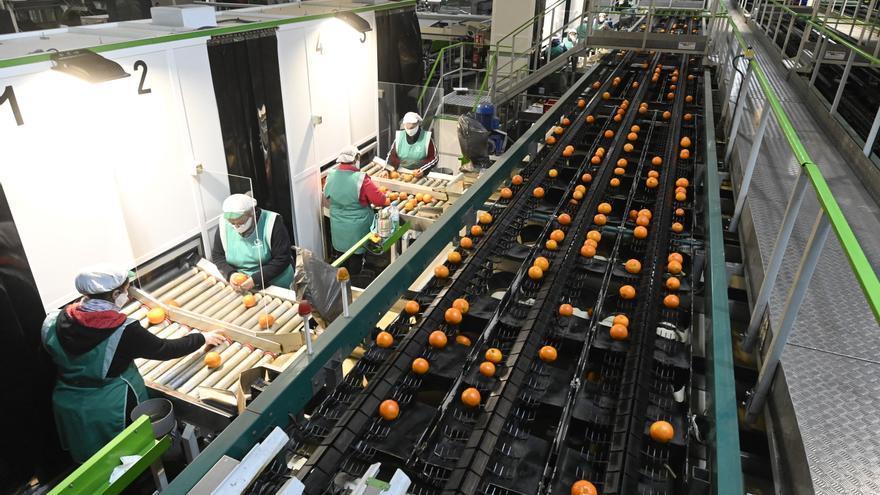 La caída de producción de cítricos disminuirá los contratos laborales en Castellón