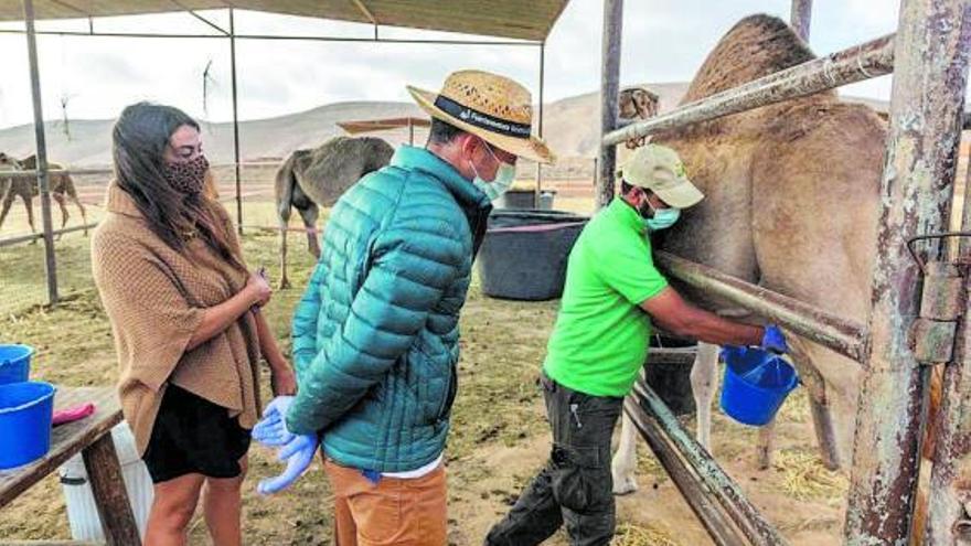 El primer queso de camella es majorero