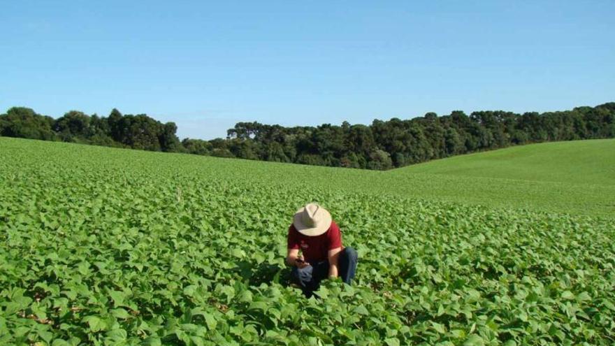 El cambio climático reduce un 21% la productividad agrícola mundial desde 1961