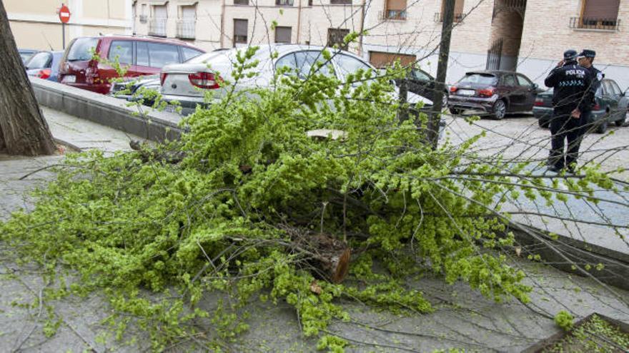 Muere una niña de 12 años al caerle una rama en Toledo