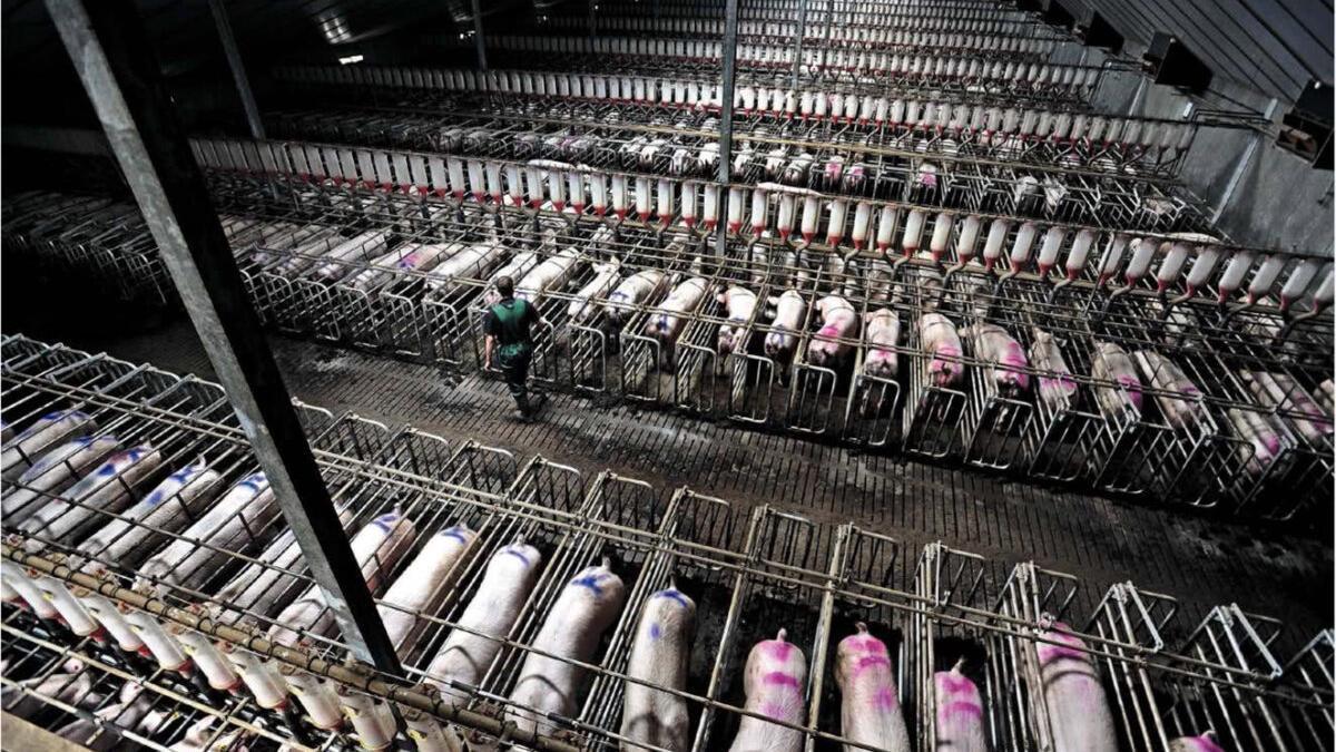 Denuncian el «devastador impacto» de la ganadería industrial sobre el planeta