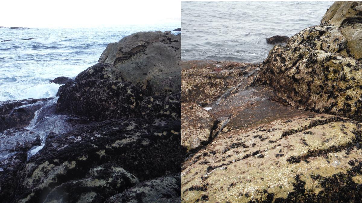 El antes y el después de unas rocas en Baiona tras la recolección de mejilla. // FdV