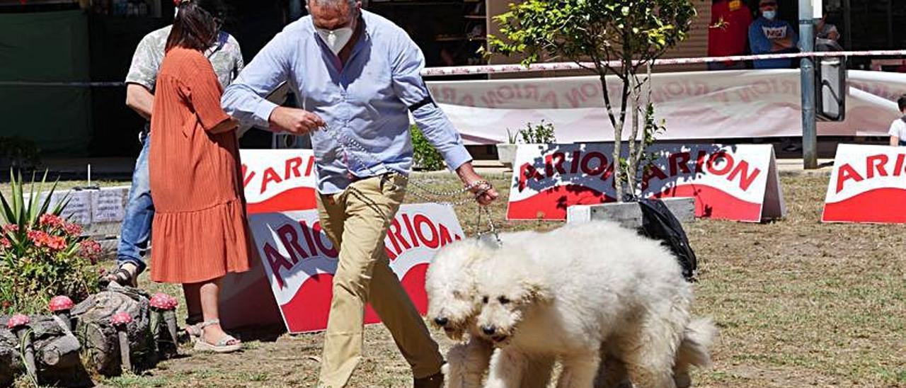Dos perros, durante la exhibición en A Toxa el pasado año.     // FDV