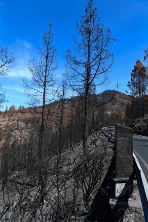 Reportaje sobre las zonas quemadas tras dos meses