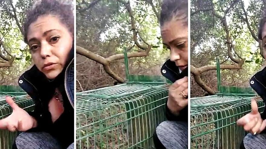 Trampas para animales y veneno en el monte de O Grove
