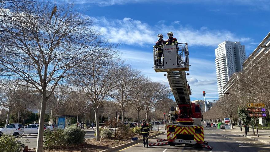 Despliegue de bomberos para intentar rescatar a un loro