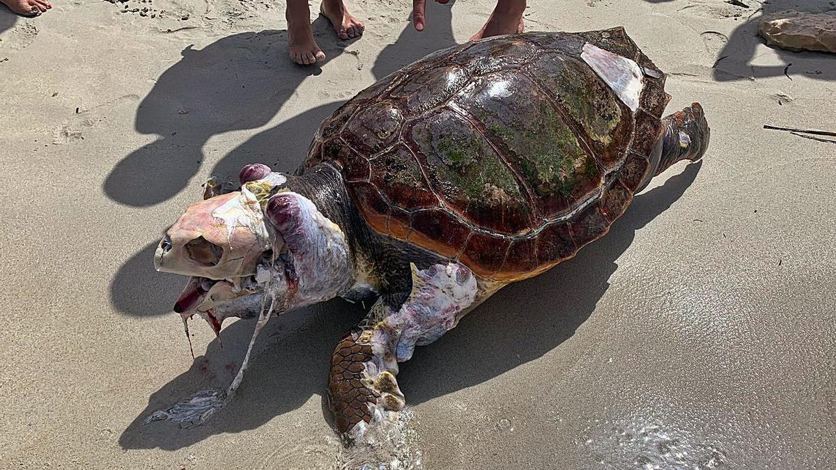 Extraña aparición en una playa de Formentera | IRÍA CONVALÍA