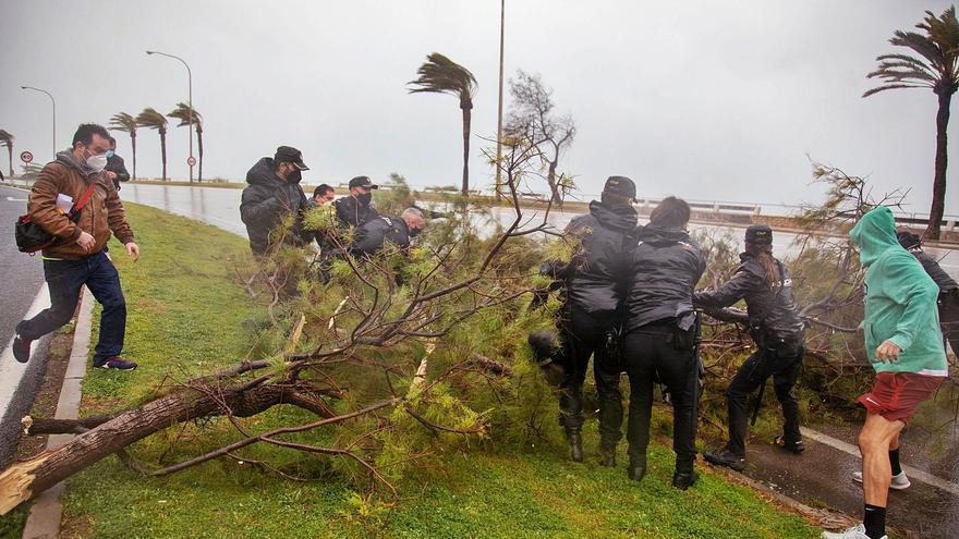 El vendaval deja tres heridos en Palma y Manacor y un reguero de destrucción en la isla