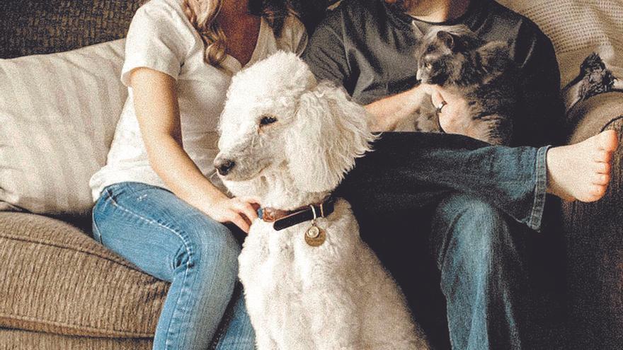 Mascotas y vacunas, las nuevas causas de litigio en divorcios en la Región