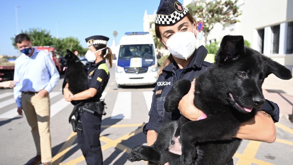 Dos cachorros de la mejor camada de perros policía viaja desde Castelló hasta Barcelona.