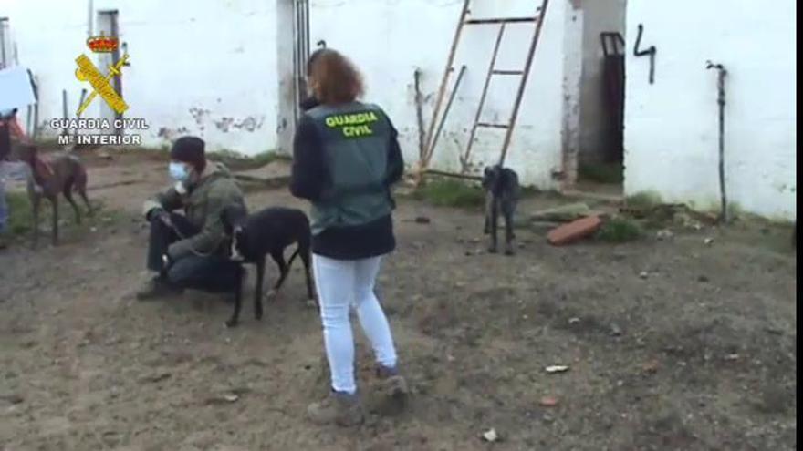 Detenido el dueño de una perrera clandestina en Madrid  con 100 perros