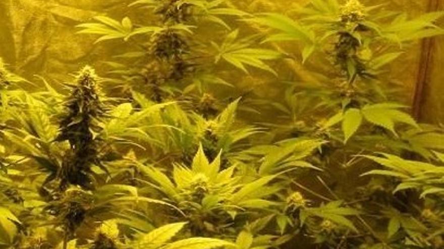 La Policía Nacional detiene a tres personas en sendos operativos contra el menudeo de droga