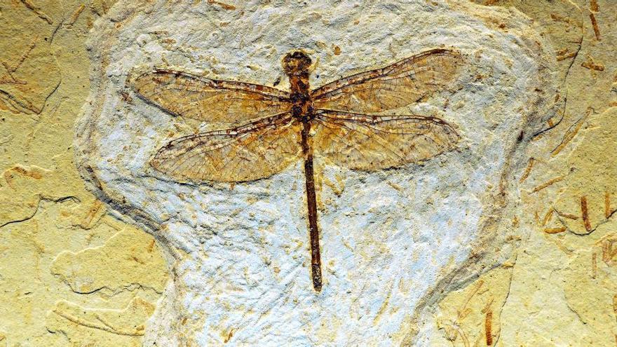 Revelan el color real de los insectos que vivían hace 99 millones de años