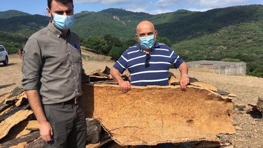 El Ayuntamiento de Ronda inicia la saca del corcho en los Montes de Propios