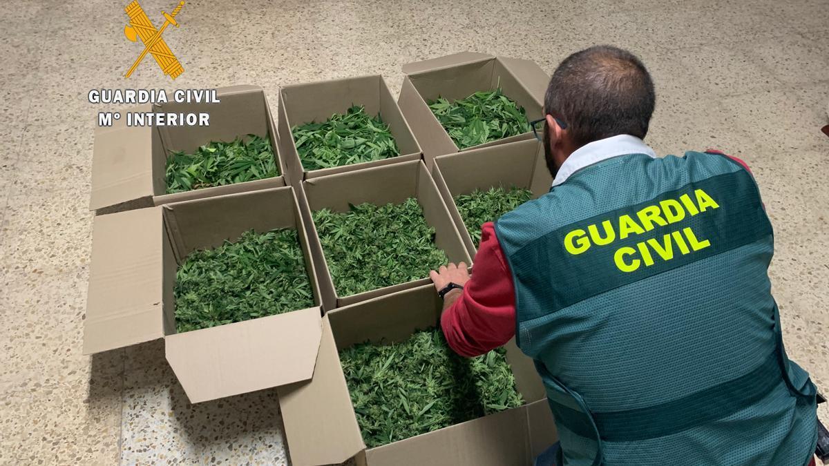Imagen de archivo de marihuana incautada por la Guardia Civil.