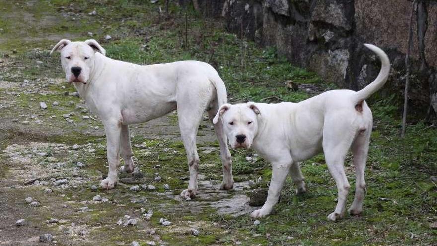 El registro de perros peligrosos se dispara tras el alza de las sanciones: 2.000 más en un año