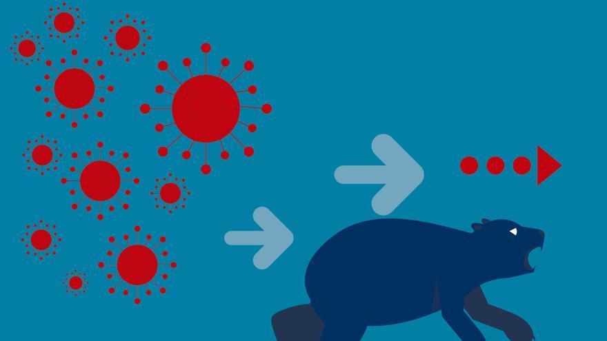 La CAM y la  pandemia