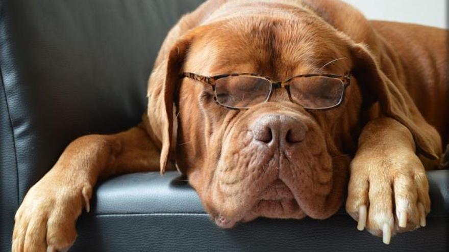 ¿Hay gafas o lentillas para perros?