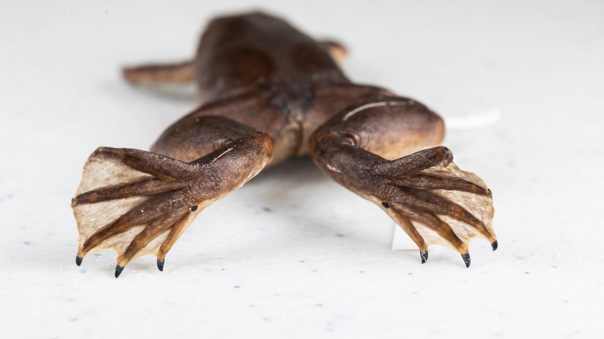 Las 272 especies invasoras que podrían causar estragos en la Península