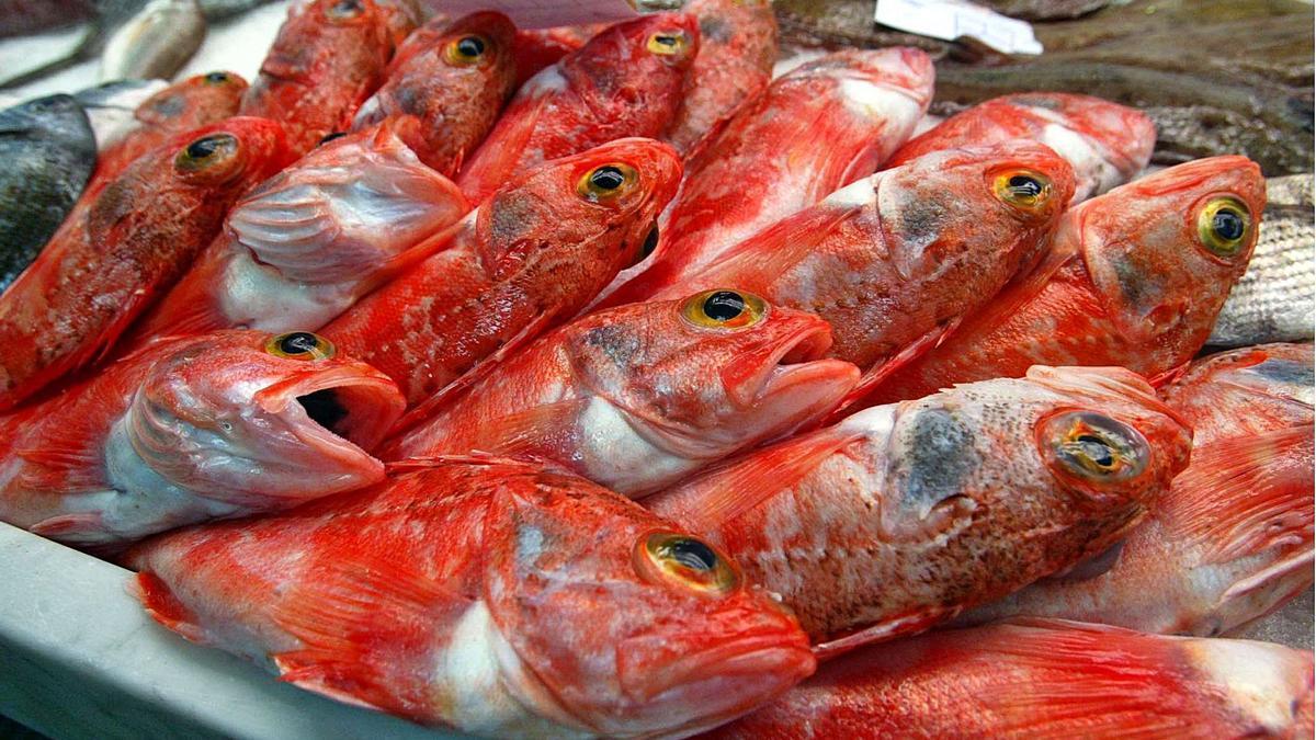 Alguns exemplars de peix de roca, un producte que és molt valorat a la cuina catalana i que ofereix moltes possibilitats a l'hora de cuinar-lo.   AJUNTAMENT DE BEGUR