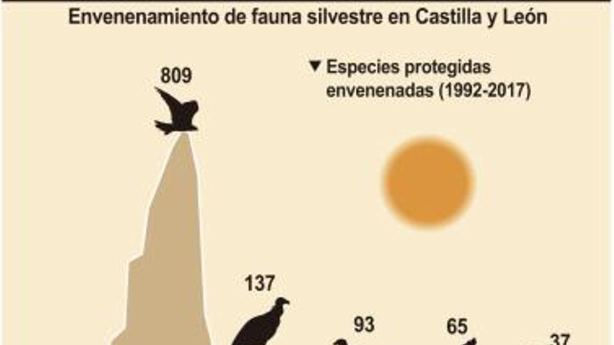 Casi cinco mil animales han sido envenenados en Castilla y León desde 1992