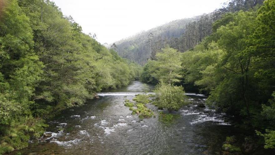 El eucalipto se extiende en Galicia por 5.000 hectáreas de espacios naturales protegidos