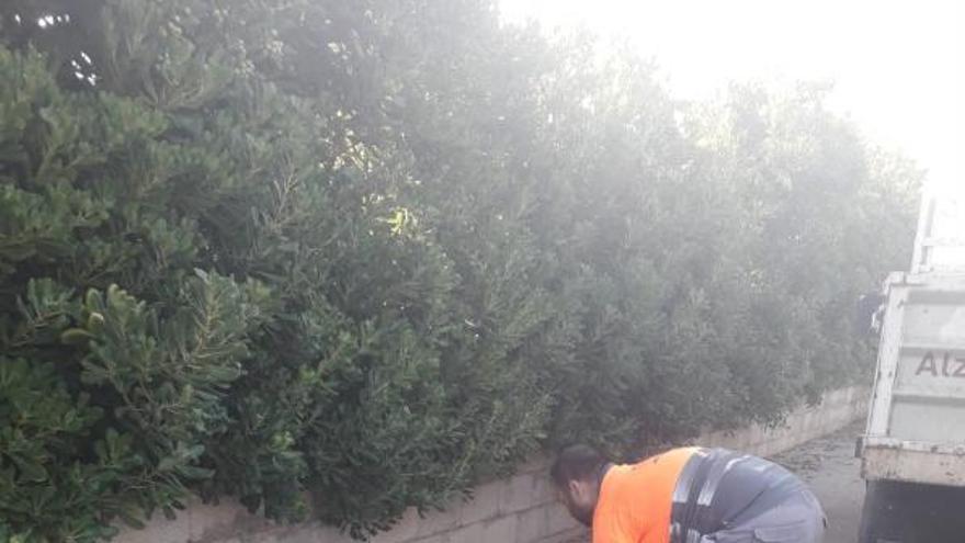 El gobierno de Alzira explota ante conductas incívicas  que generan insalubridad