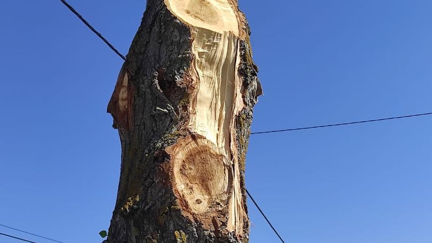 """Los ecologistas critican """"malas prácticas"""" en la poda de árboles en Tagarabuena"""