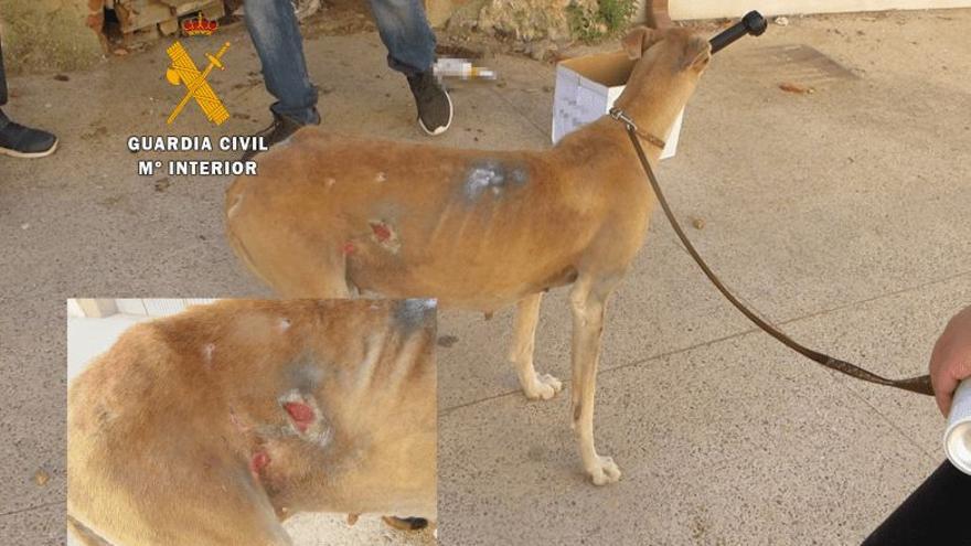 La Guardia Civil investiga a una persona como presunta autora de un delito de maltrato animal en Toro