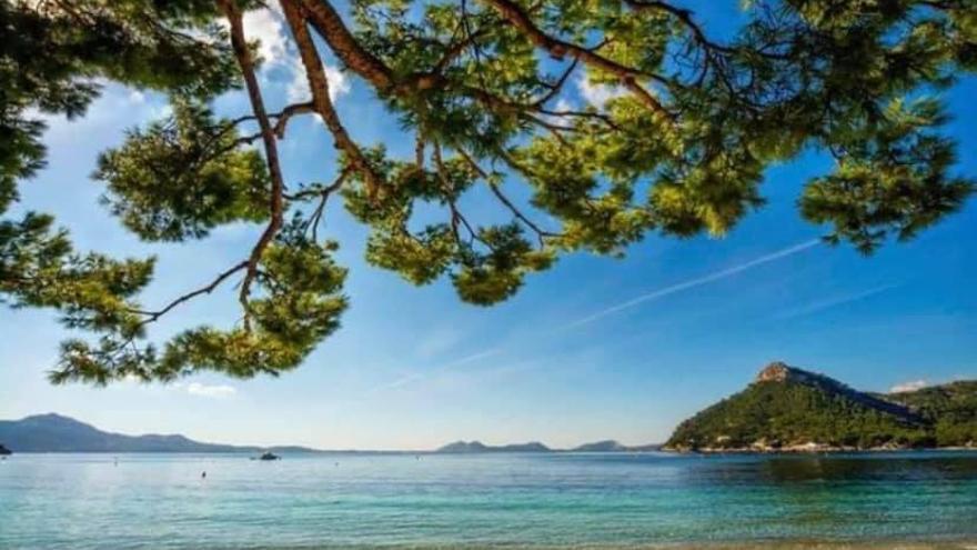 Pollença asegura que todas las playas son aptas para el baño