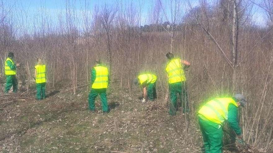La Junta aprueba trabajos de prevención de incendios en 10 municipios de Sanabria y Aliste