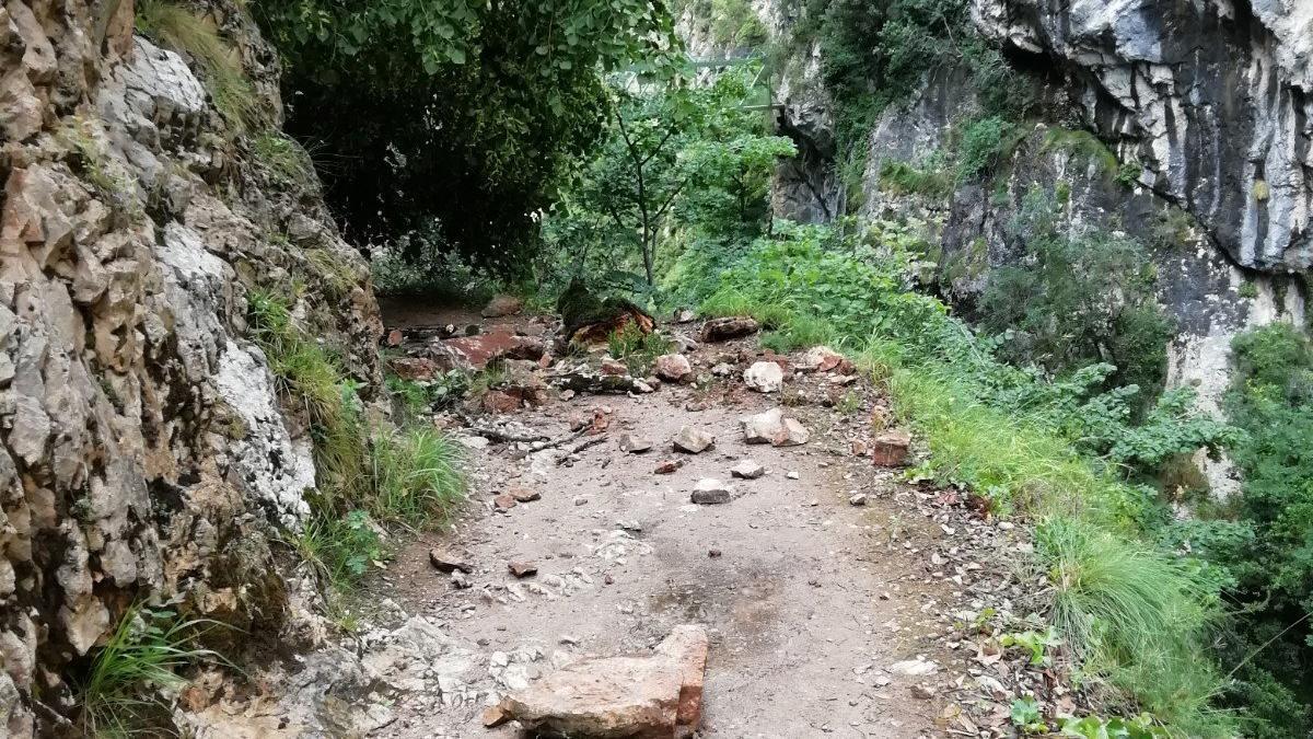 El árbol caído en la ruta del Cares