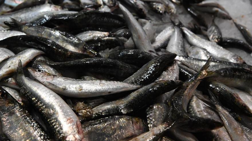 San Xoán 2019   La sardina, reina en los mercados coruñeses