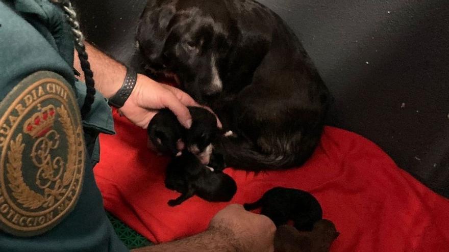 Así amamantan unos cachorros tras ser rescatados de un contenedor en Sanxenxo