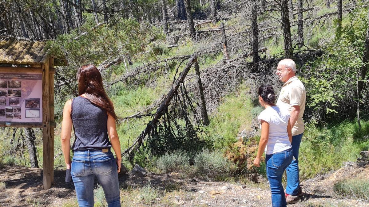 El alcalde enseñó a la comitiva del PP desplazada a la localidad que la leña de los pinos caídos se está volviendo cada vez más seca.